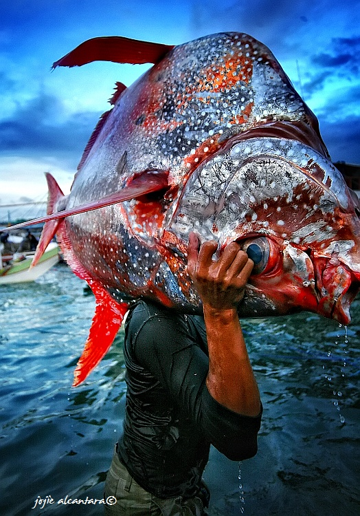 Opah or Diana catch in GenSan City Complex by Jojie Alcantara