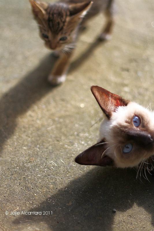 cats by jojie alcantara