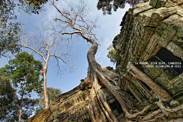 Ta Phrom, Siem Reap, Cambodia by Jojie Alcantara