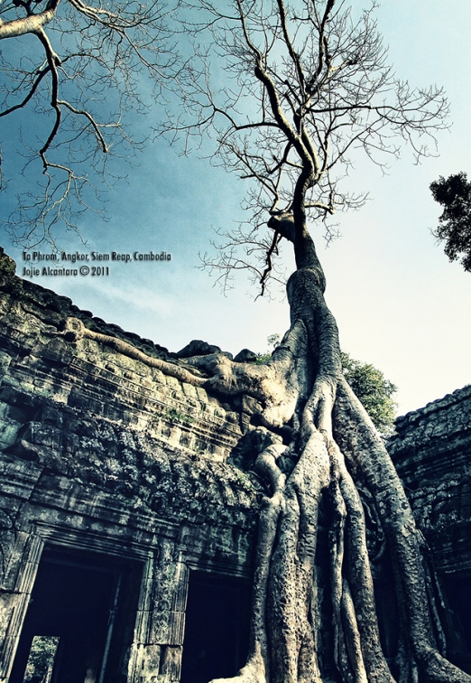 Ta Phrom ruins swallowed by giant silk cotton trees  © Jojie Alcantara