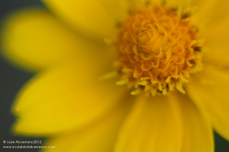 Tiny flower © Jojie Alcantara 2012