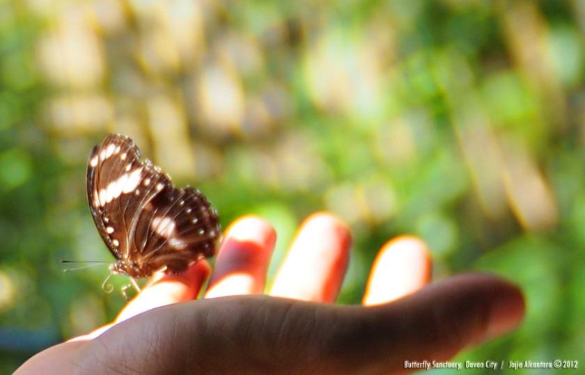 Butterfly Sanctuary, Croc Park © Jojie Alcantara 2012