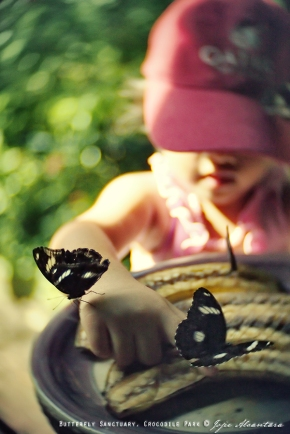 Butterfly Sanctuary © Jojie Alcantara