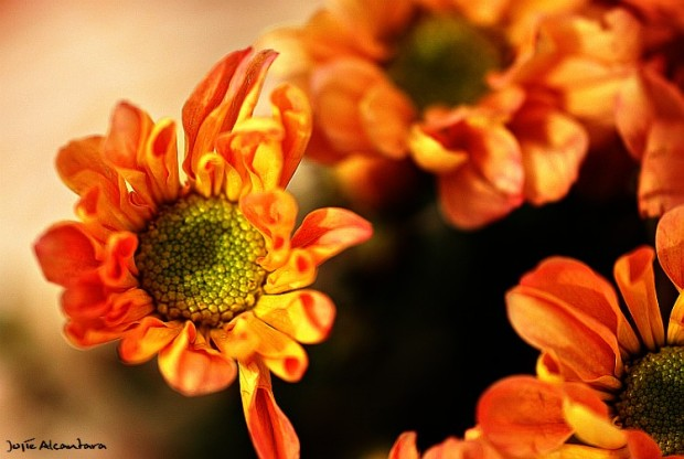 Macro on flowers © Jojie Alcantara