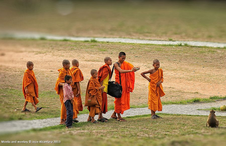 Monks and monkey, (Siem Reap, Cambodia)