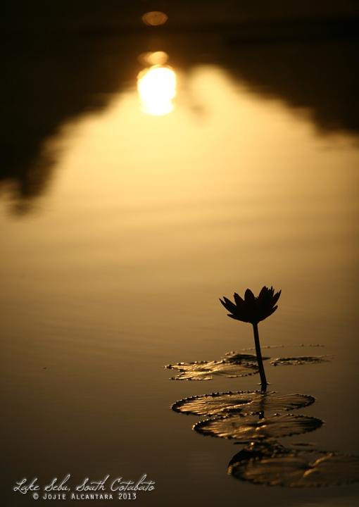 Lotus at sunrise © Jojie Alcantara