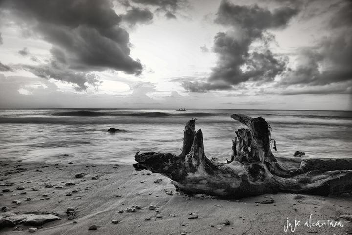 Driftwood  © Jojie Alcantara
