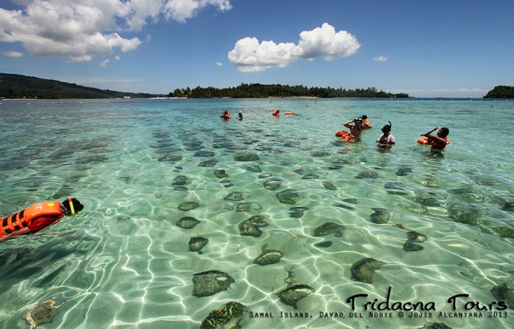 Tridacna Tours Project in Samal © Jojie Alcantara