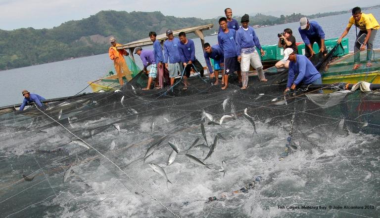 Malalag Bay Fish Cages