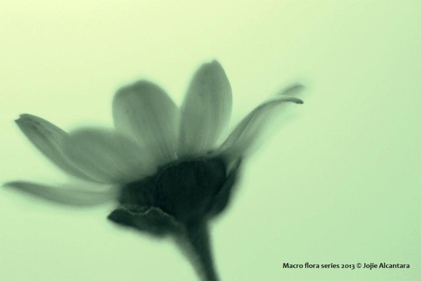 Macro shot © Jojie Alcantara