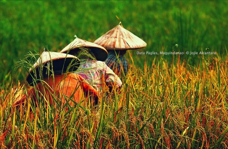 Harvesters  © Jojie Alcantara