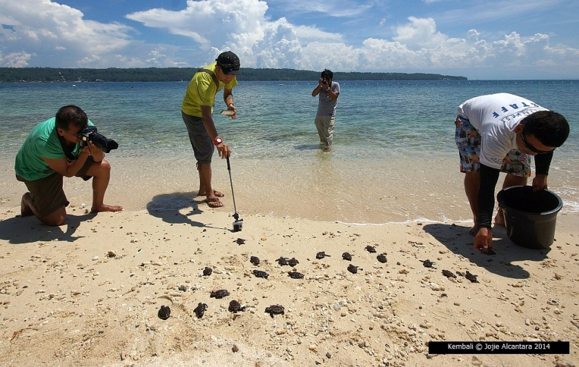 Hatchlings being released into sea  © Jojie Alcantara