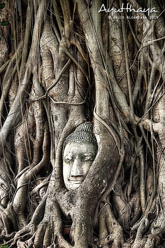 Iconic Head of Buddha in Banyan tree Wat Mahathat in Ayutthaya by Jojie Alcantara s