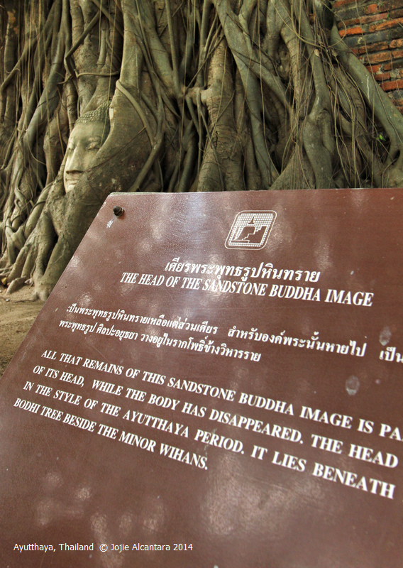 "Inscription : ""Al that remains of the Sandstone Buddha image is part of the head, while the body has disappeared. The head is in the style of the Ayutthaya period. It lies beneath the Bodhi tree beside the Minor Wihans."""