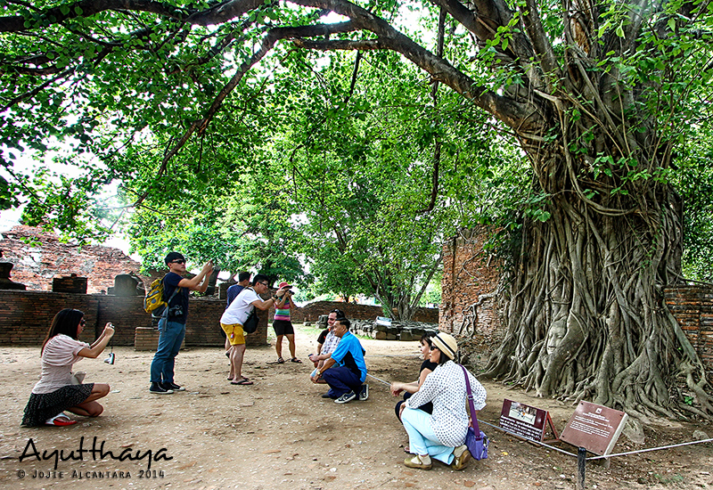 Tourists flock for photos with the Head of Buddha by Jojie Alcantara