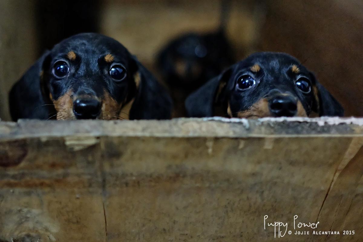 Puppy Power by Jojie Alcantara