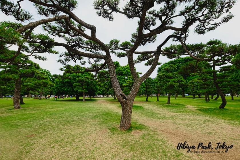 Hibiya Park Tokyo Japan by Jojie Alcantara