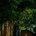 Siem Reap, Cambodia © Jojie Alcantara
